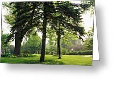 Trees In A Park, Adams Park, Wheaton Greeting Card