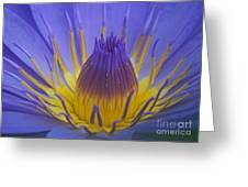 Tropic Water Lily 16 Greeting Card