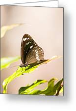 Tropical Butterfly Greeting Card