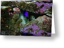 Tropical Fish In Cave Greeting Card