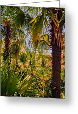 Tropical Forest Palm Trees In Sunlight Greeting Card