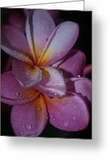 Tropical Rains Greeting Card