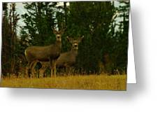Two Young Bucks Greeting Card
