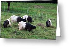 Valais Blackneck Goats Greeting Card