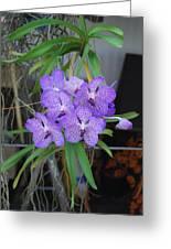 Vanda Orchid Greeting Card