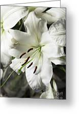 Vase White Lilies With Falling Petals As They Die Greeting Card