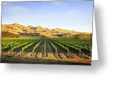 Vineyard In Canterbury New Zealand Greeting Card