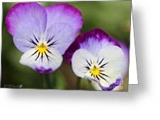 Viola Named Sorbet Lemon Blueberry Swirl Greeting Card