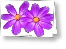 Violet Asters Greeting Card