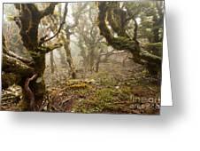 Virgin Mountain Rainforest Of Marlborough Nz Greeting Card