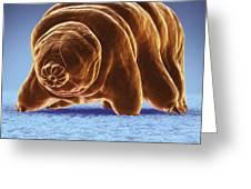 Water Bear Tardigrades Greeting Card