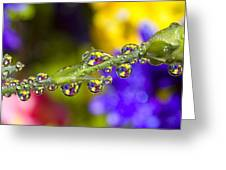 Water Drops On A Flower Stem Greeting Card
