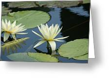 2 Waterlilys Rising Above The Water Greeting Card