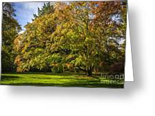 Westonbirt Arboretum Greeting Card