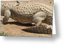 White Crocodile Greeting Card
