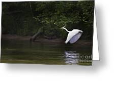 White Egret In Flight Greeting Card