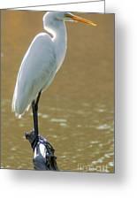 Magnolia White Heron Greeting Card