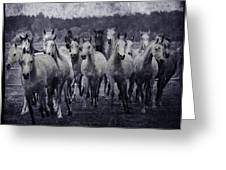 White Horses  Greeting Card