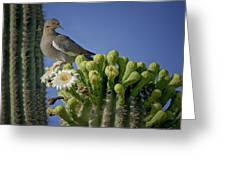 White-winged Dove Atop A Saguaro Greeting Card