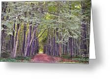 Whitwell Wood Greeting Card