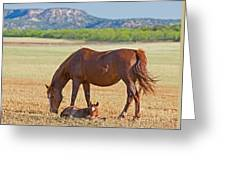 Wild Horses Mother And Foal Greeting Card