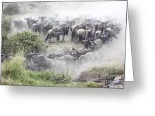 Wildebeest Migration 1 Greeting Card