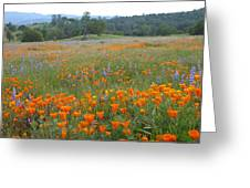 Wildflower Wonderland 10 Greeting Card