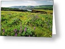 Wildflowers In A Field, Columbia River Greeting Card