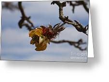Wiliwili Flowers - Erythrina Sandwicensis - Kahikinui Maui Hawaii Greeting Card