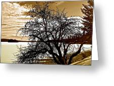 Willow On Silver Lake Greeting Card