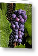 Wine In A Web Greeting Card