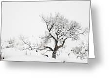 Winter Sage Greeting Card