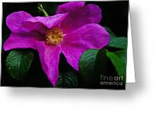 Withered Rose Greeting Card