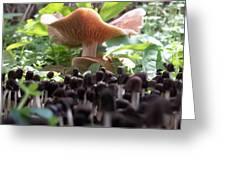 World Of Mushroom Greeting Card