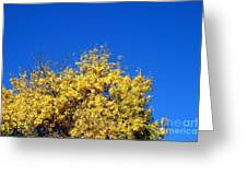 Yellow Autumn Tree Greeting Card