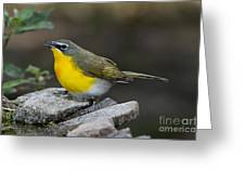 Yellow-breasted Chat Greeting Card