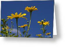 Yellow Buttons Greeting Card