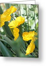 Yellow Iceland Poppy Greeting Card