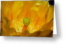 Yellow Prickly Pear Bloom Greeting Card