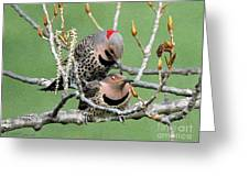 Yellow-shafted Northern Flickers Greeting Card