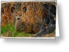 Young Mulie Greeting Card