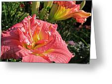 Zona Rosa Daylily Greeting Card