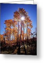 California, Sierra Nevada Mountains Greeting Card