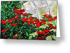 2013 010 Poinsettias And Dots Conservatory At The Us Botanic Garden Washington Dc Greeting Card