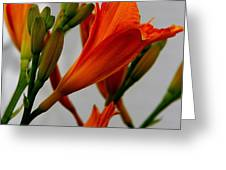 2013 Day Lilies Greeting Card