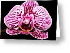 2014 Orchid Greeting Card