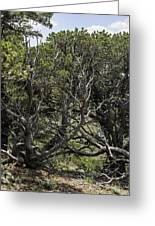 201407250-089 Capulin-bare-trees Greeting Card