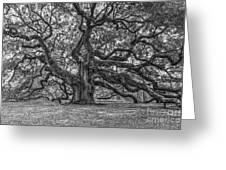 Angel Oak Tree In Black And White Greeting Card