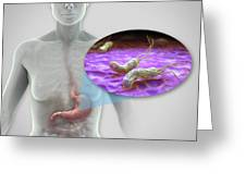 Helicobacter Pylori Greeting Card