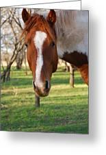 Paint Stallion Greeting Card